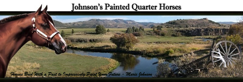 Johnson's Painted Quarter Horses Stallion Page