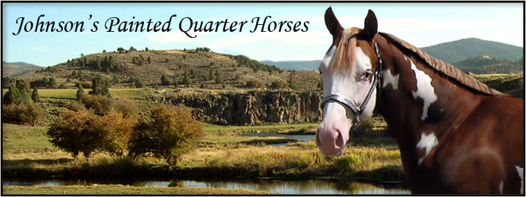 Johnson's Painted Quarter Horses